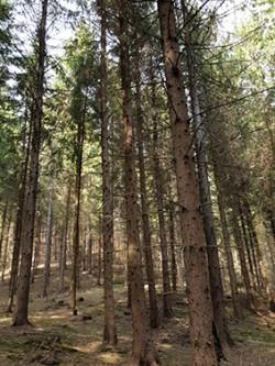 Investir dans le bois à l'étranger