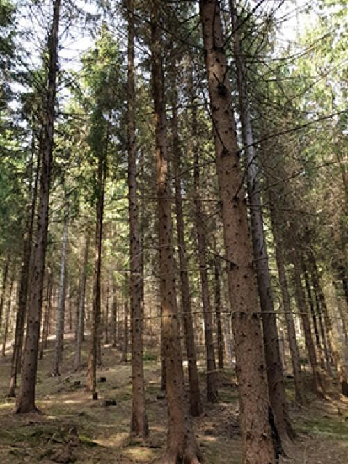Investiții în lemn în străinătate